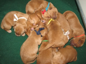 pile of pups.