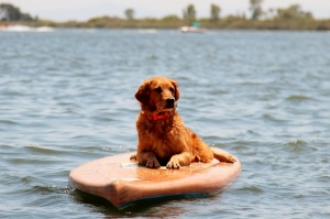 Paddle Board Queen!