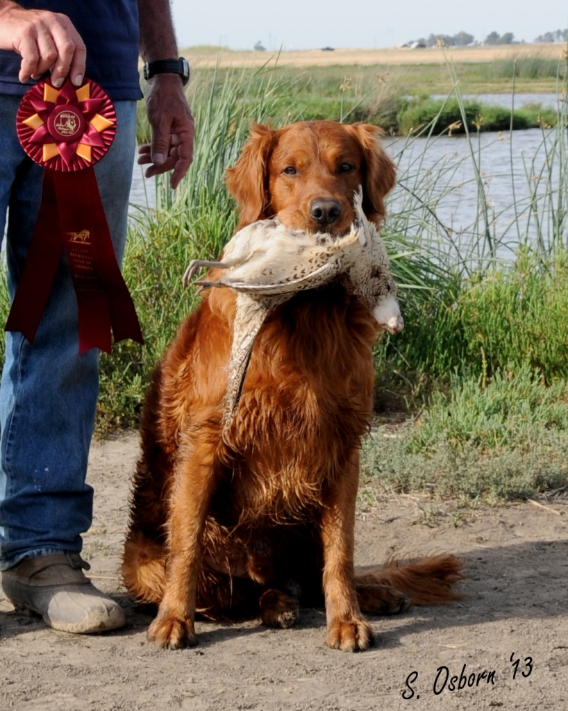 Search And Rescue Dog Training San Francisco