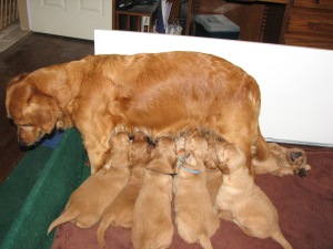 Mamma doesn't really want to stand but she does for the pups